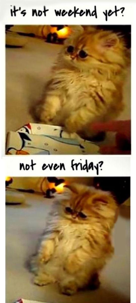 Ah, These Are My Tuesdays, Wednesdays And Thursdays