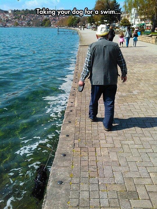 funny-man-walking-dog-swim