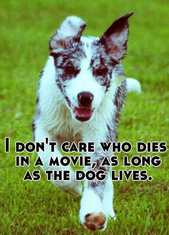 funny-movie-dog-logic-living