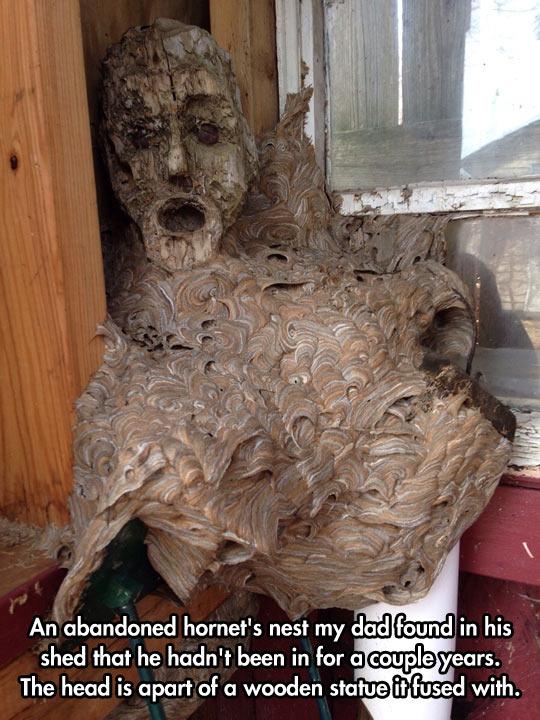 Scary Hornet Nest