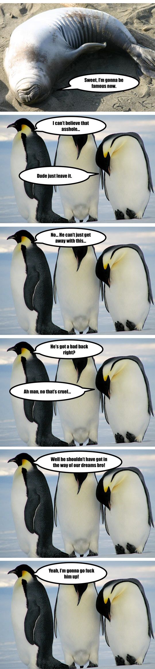 funny-penguin-arctic-National-Geographic-camera