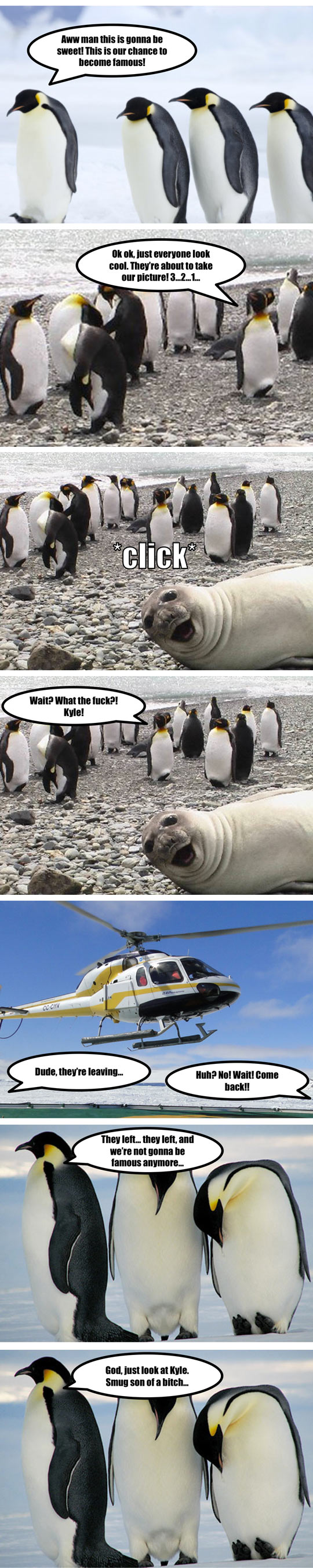 funny-penguin-arctic-National-Geographic-seal