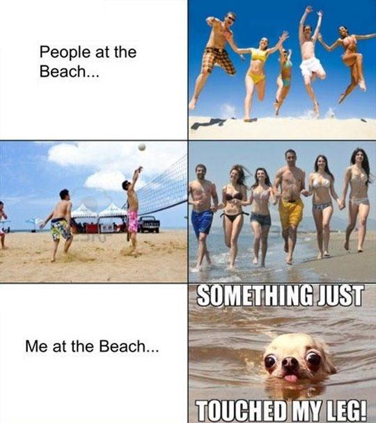funny-people-beach-sun-dog-swimming