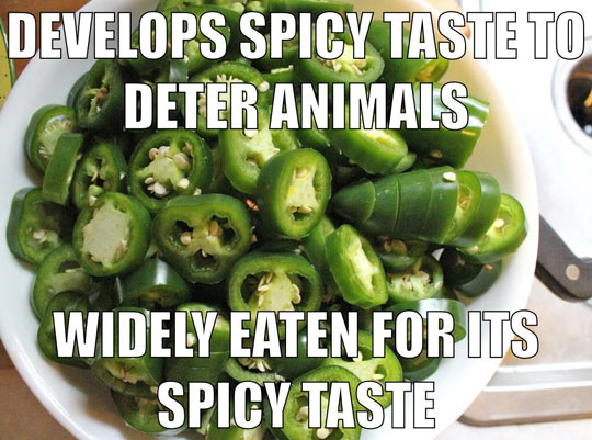 funny-peppers-jalapenos-spicy-food