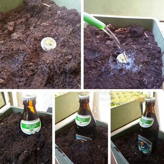 funny-plant-cap-beer-growing