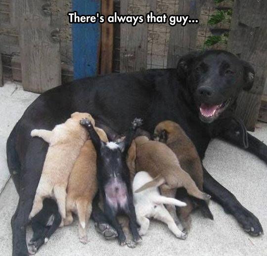 funny-puppy-mom-feeding-belly