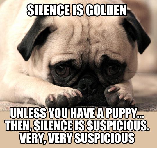 funny-puppy-silence-suspicious