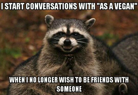 funny-raccoon-mad-face-vegan-evil