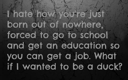 funny-school-education-job-duck