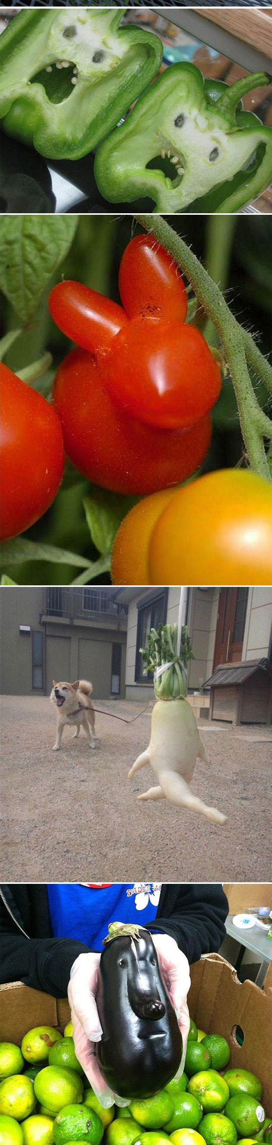 funny-shaped-vegetables-fruits-animals-tomato