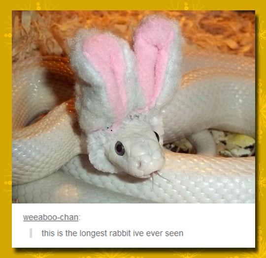Animal Mutations Are Getting Weirder
