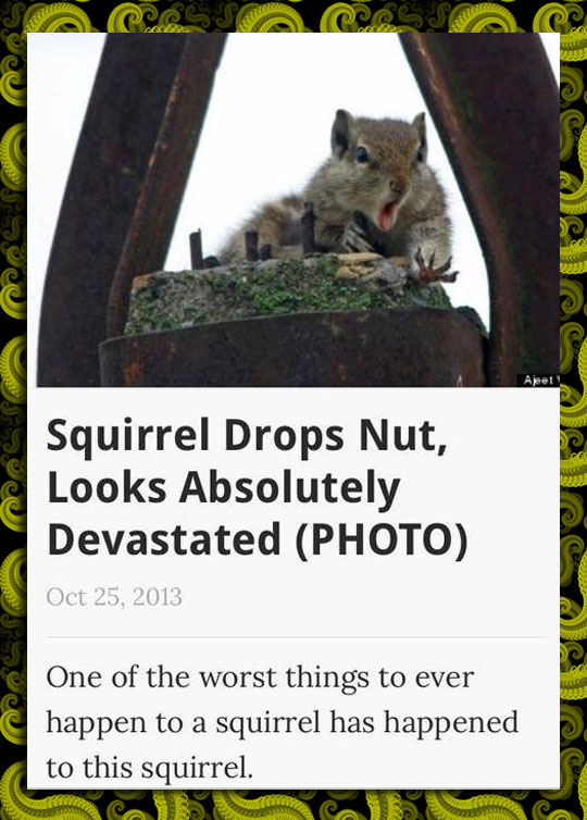 funny-squirrel-worried-screaming-nuts