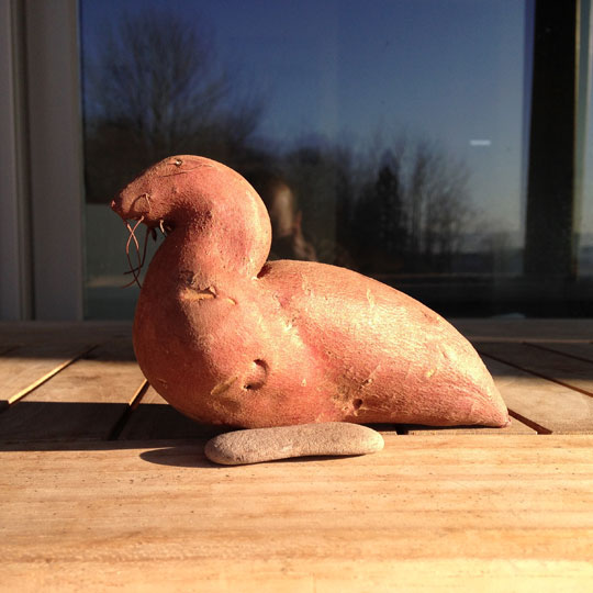 Sweet Potato Looks Like Harbor Seal