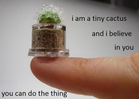 Inspirational Cactus