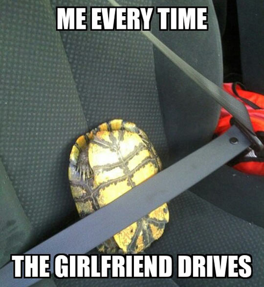 funny-tortoise-car-belt-scared