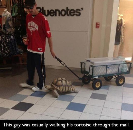 Dogs Are Too Mainstream