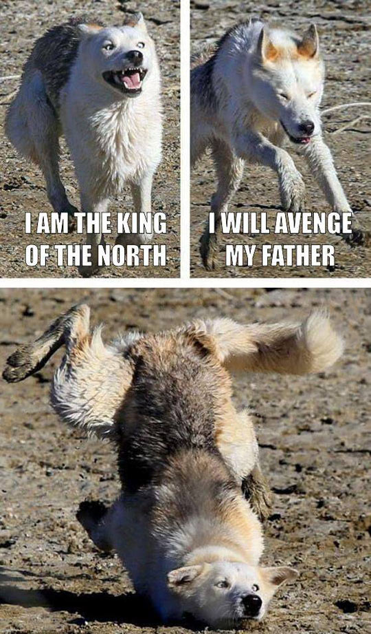 funny-wolf-falling-mud-King-North