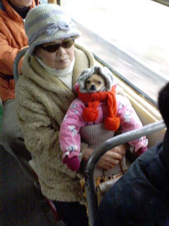 funny-woman-bus-baby-dog-dress
