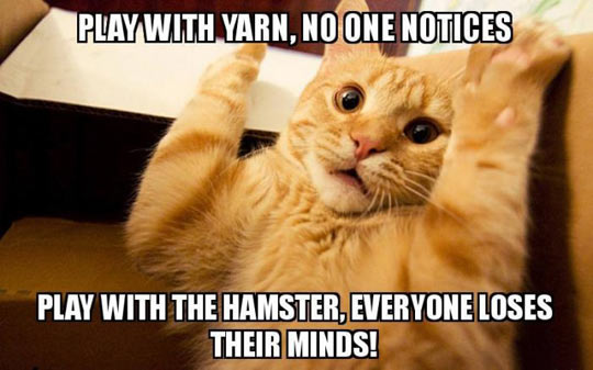 funny-yarn-hamster-cat-paws-up