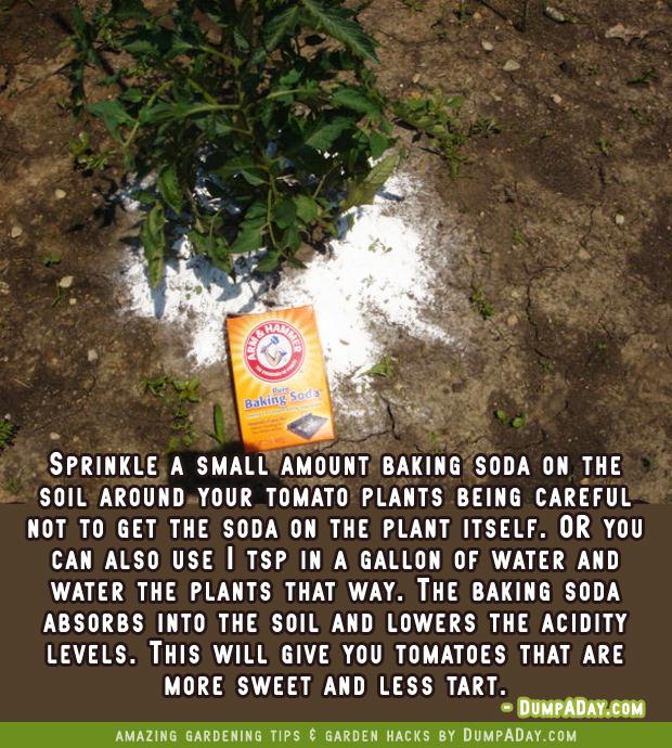 DumpADay-Garden-Hacks-Baking-Soda-for-sweeter-tomatoes