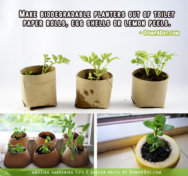 DumpADay-Garden-Hacks-Biodegrable-planters