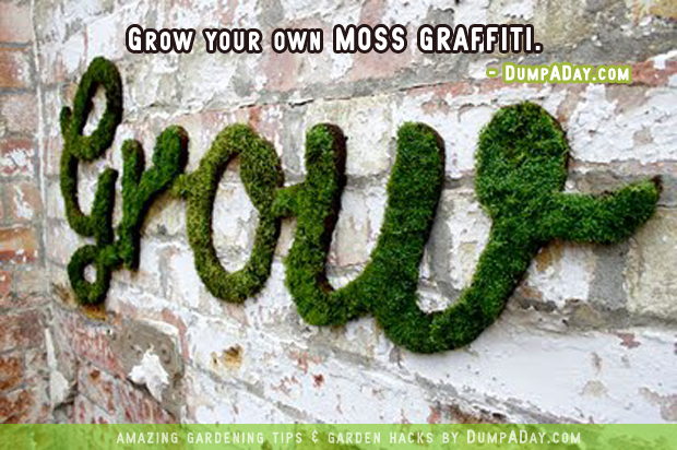 DumpADay-Garden-Hacks-Moss-graffiti