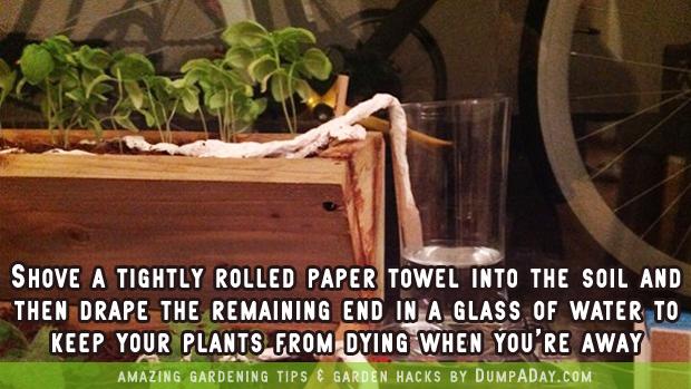 DumpADay-Garden-Hacks-Paper-towel-trick