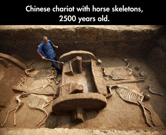 cool-Chinese-chariot-horse-skeletons