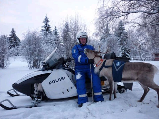 A Finnish Police Man With His Police Reindeer