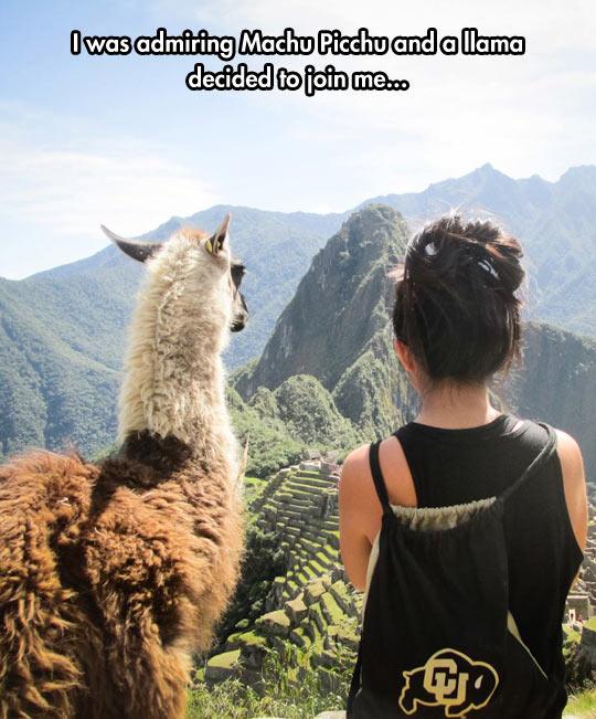 Admiring Machu Picchu