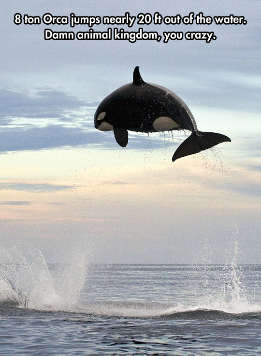 cool-Orca-water-jumping-animal