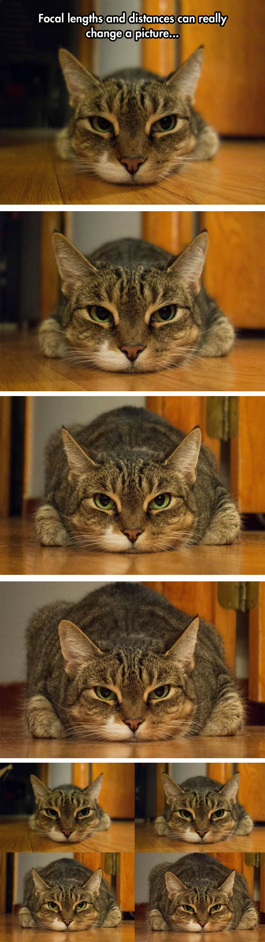 cool-cat-focal-lengths-fat