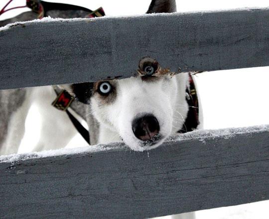 cool-dog-look-eyes