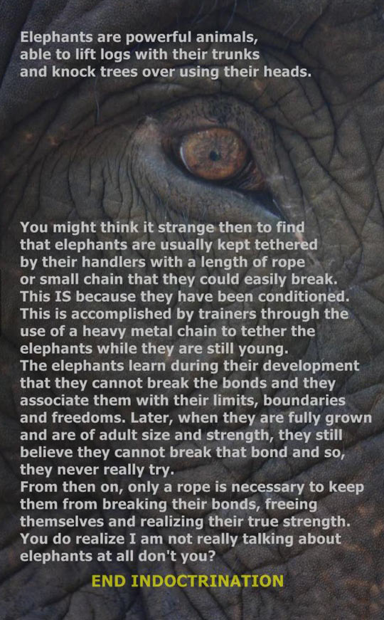 Powerful Animals