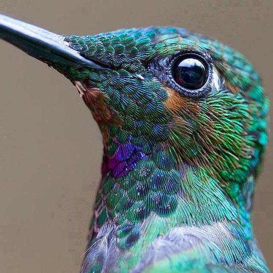 cool-hummingbird-close-up-colors