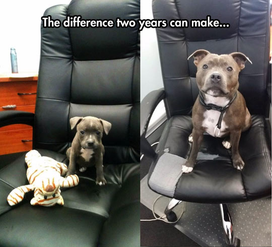 Puppy Has Grown Up