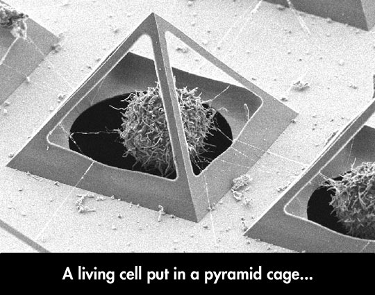 A Living Cell