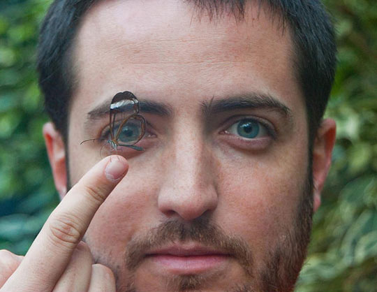 cool-transparent-butterfly-eye
