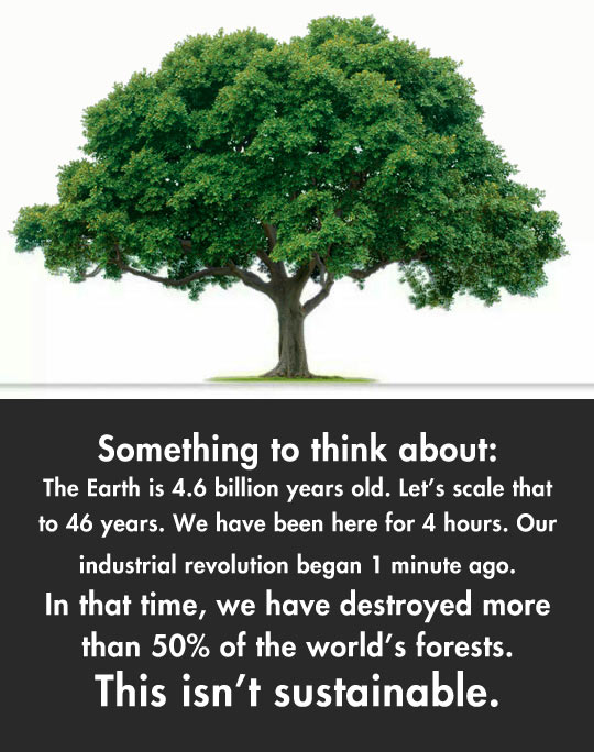 cool-tree-fact-Earth-age