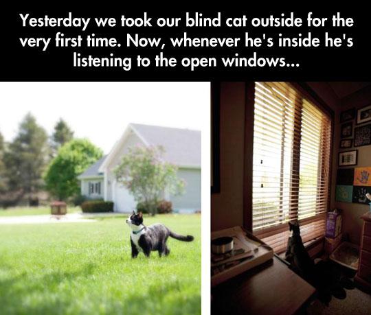 cute-blind-cat-grass-listening