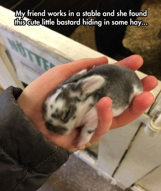 cute-fat-little-baby-bunny