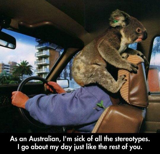 funny-Australian-koala-bear-car