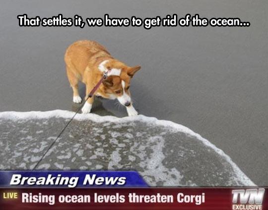 Save The Corgi
