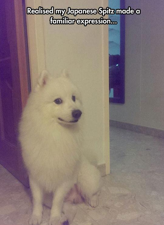 funny-Doge-face-dog-expression