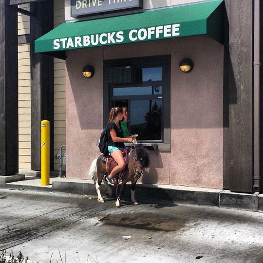 funny-Starbucks-drive-thru-riding-donkey