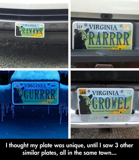 funny-Virginia-bear-plate-license