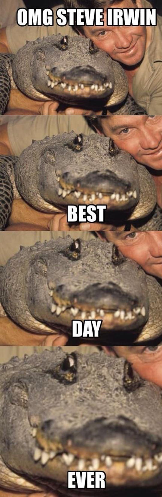 funny-alligator-Steve-Irwin-fan