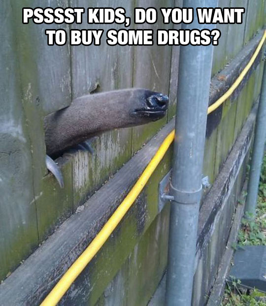 funny-anteater-hole-mouth-fence