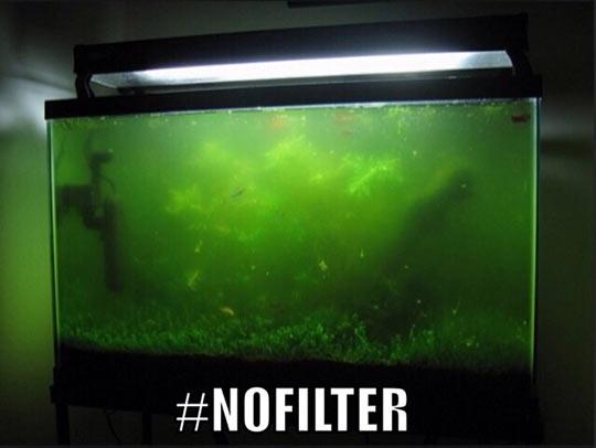 funny-aquarium-filter-water-rot