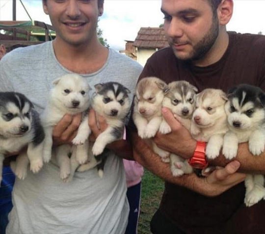 Arms Full Of Cuteness